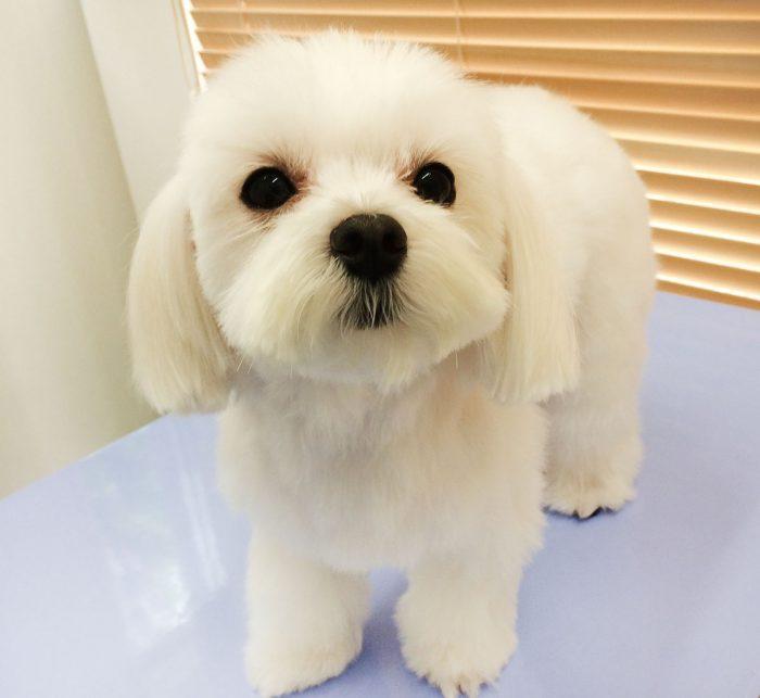 温浴システムの犬